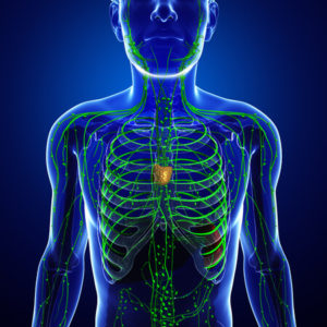 The Lymphatic System and Ways to Keep It Healthy